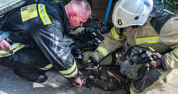 В Симферополе из горящей квартиры спасли котиков