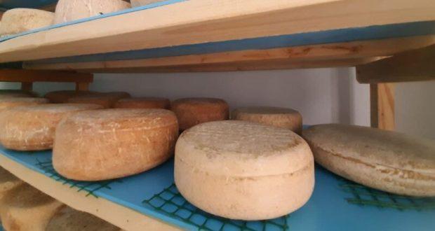 В Крыму сыровары производят всё больше продукции
