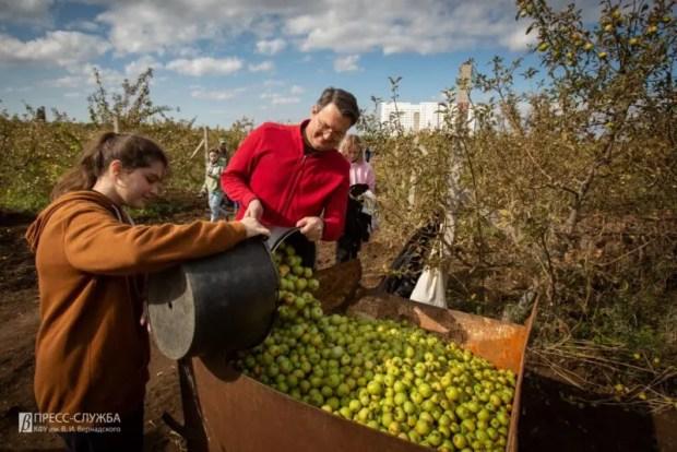 Учёные КФУ изучат полезные свойства яблочного сидра