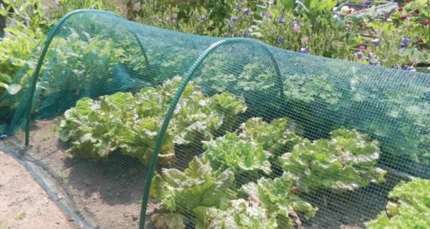 Пластиковая садовая сетка - универсальный материал, который в хозяйстве точно пригодится