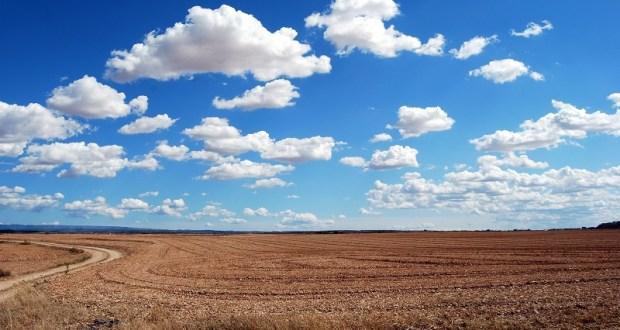 Почти сто тысяч гектаров сельхозземель в Крыму «простаивают» без дела
