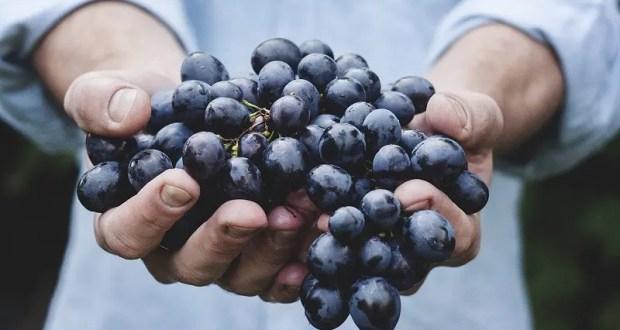 Воровал виноград «с размахом». Инспекторы ГИБДД удивились, открыв багажник авто феодосийца