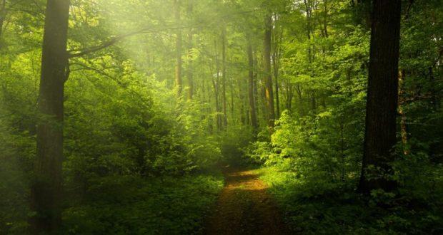 Ялта - в топе самых «зелёных» городов в России