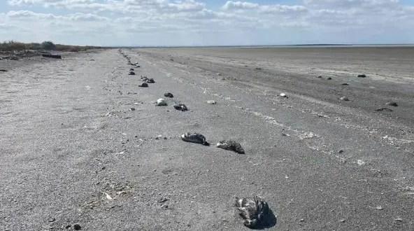 Названа причина скопления большого количества погибших птиц на севере Крыма