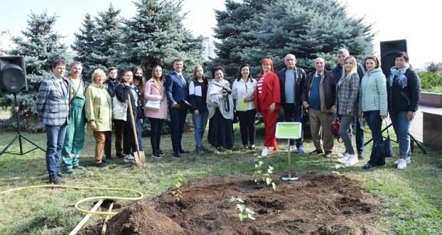 В Евпатории высадили уникальные березы из Воронежа
