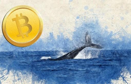 Las ballenas crypto cierran el mes de enero vendiendo sus Bitcoin y XRP.