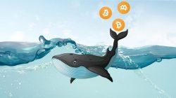 El stablecoin USDT de Tether y el token XRP de Ripple son controlados por las ballenas