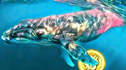 Novedades de las ballenas crypto