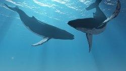 Precio del Bitcoin es influenciado al alza por las ballenas crypto