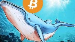Novedades sobre las ballenas crypto