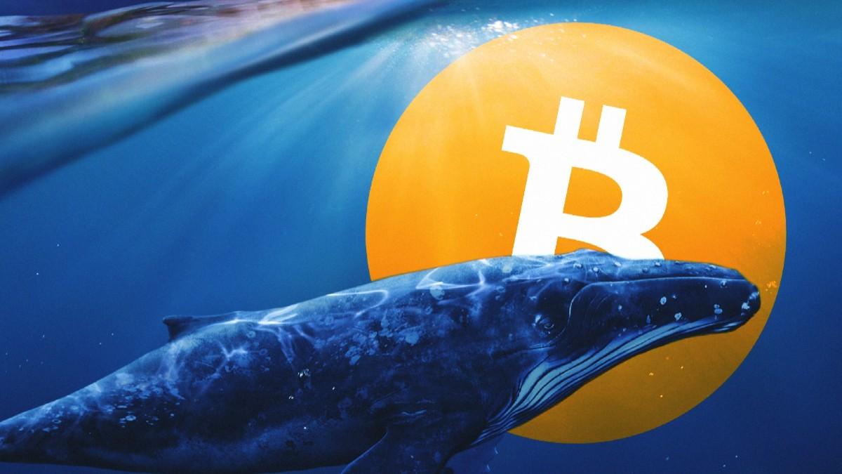 La actividad de las ballenas Bitcoin el día de ayer no parece ser causante del desplome de BTC, pero si es indicio de que las ballenas esperan aumentos en los próximos días.