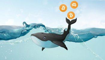 Le whale hanno sfruttato la recente correzione per accumulare 122.588 Bitcoin