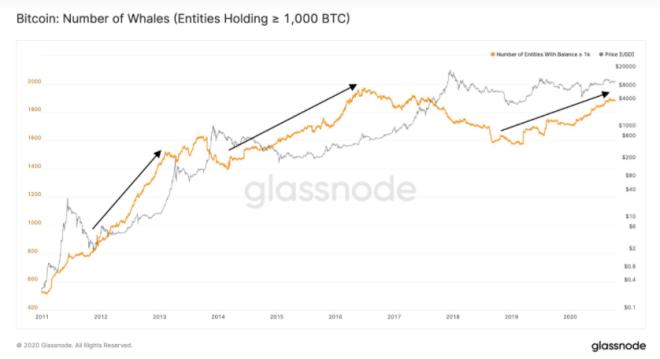 El número de ballenas Bitcoin está aumentando, y esto implica que está entrando más y mayor capital al mercado de BTC. Fuente: Glassnode