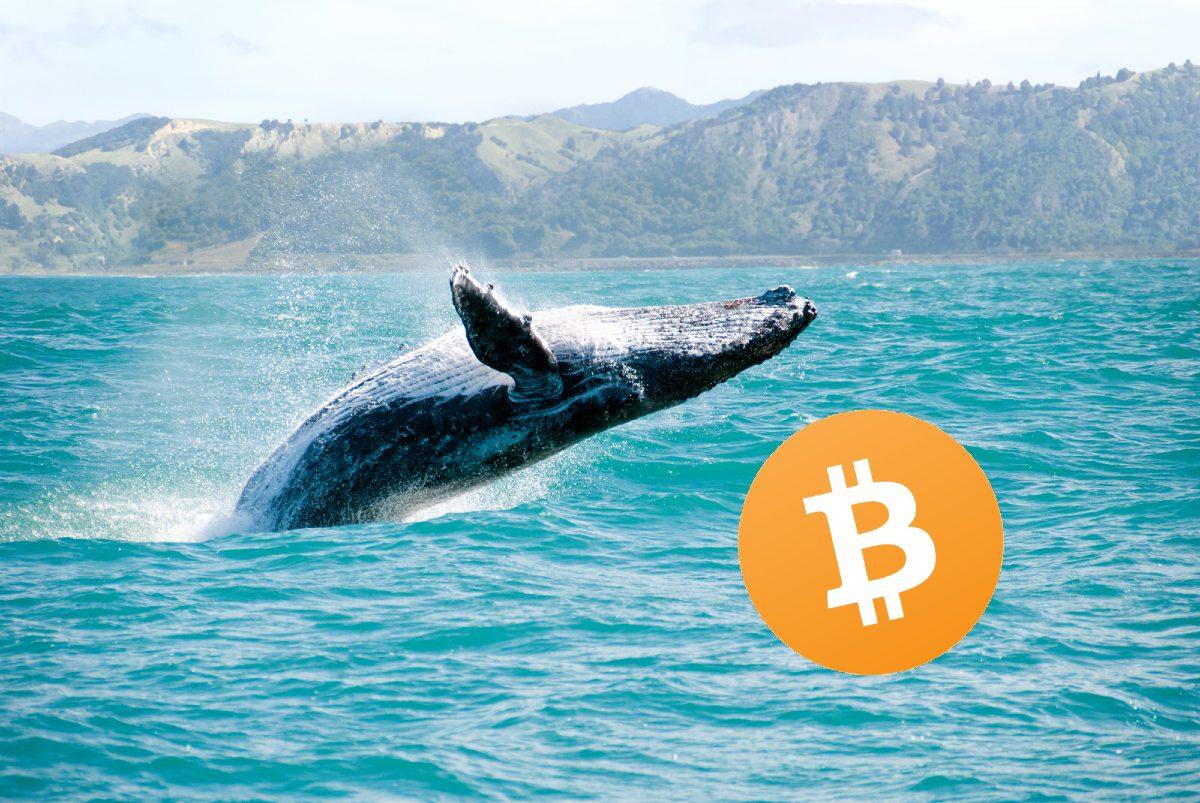 ¿Las ballenas Bitcoin están acumulando BTC nuevamente?