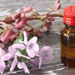 fleurs-bach-crisalida-rebozo-quebec