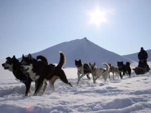 trineo-perros-