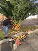 Mantenimiento y poda en jardineras de la Av. Pedro Aguayo