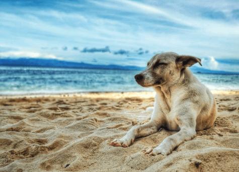 foto de perros al amanecer