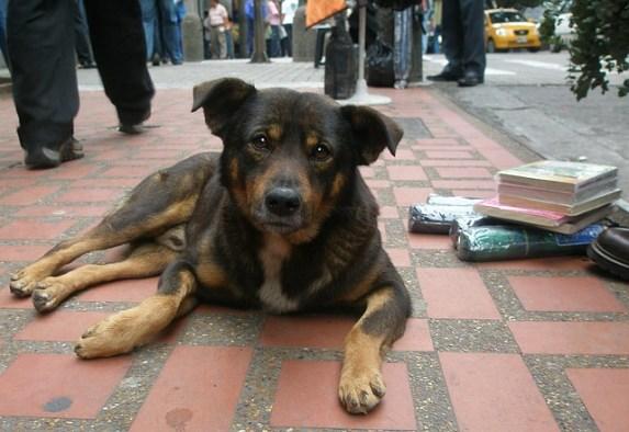 dog-1192725_640