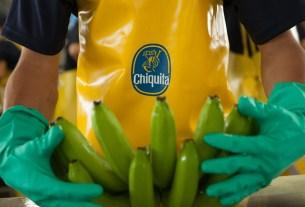 Chiquita,пестициды,ГМО,бананы