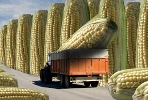 пестициды,экопродукты,США