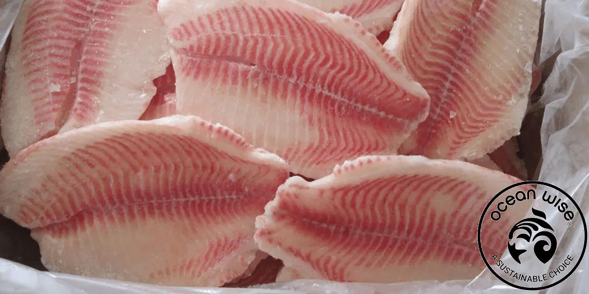 Тилапия, рыба, Ocean Wise