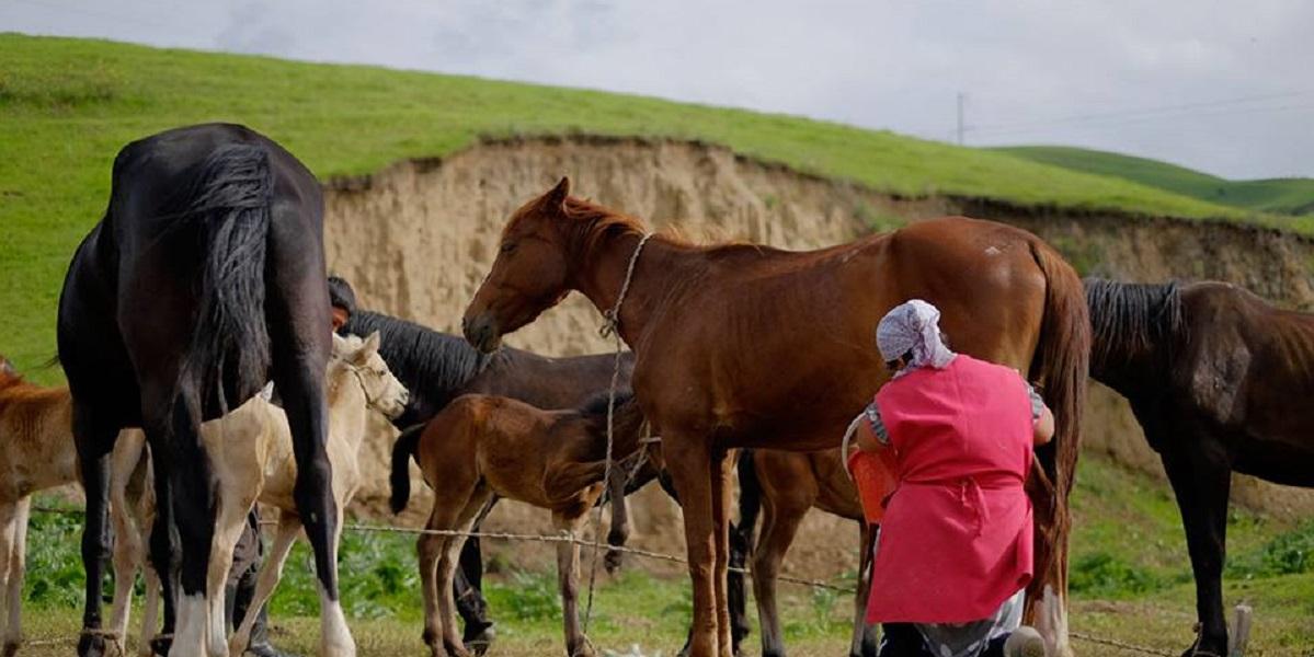ГОСТ, молоко кобылье, Казахстан, нормативный акт