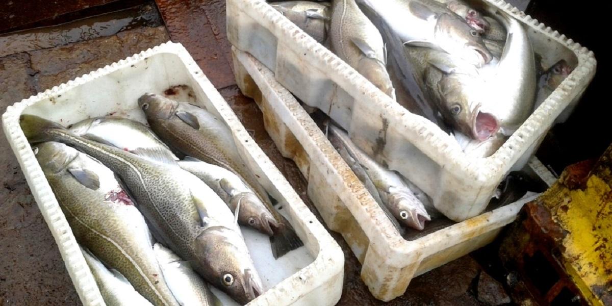 ВНИРО,охлажденка,нет,рыба,заморозка