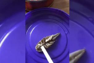 Ноябрьск, консервы, килька в томате, морской таракан, ТМ «Вкусные консервы»