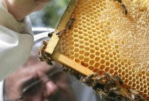 «Медведь», пчёлы,мёд, репродукция,репродуктор,Егорьвск