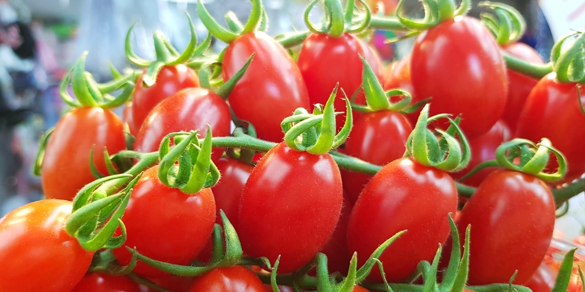 черри,томаты, микоризные грибы