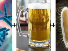 Пробиотики, бактерии, пиво, дуриан