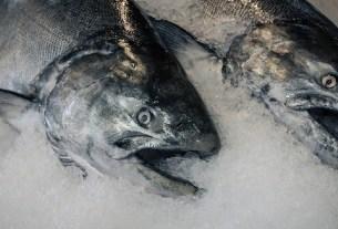 Охлажденная рыба, замороженная рыба, свежесть рыбы
