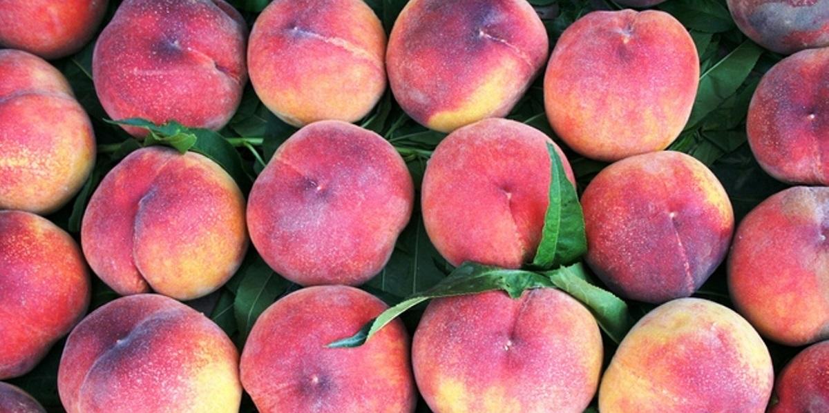 CFIA, Prima Sweet Value Wawona, Sweet 2 Eat, Sweet O, Wawona, Wegmans,Extrafresh, сальмонеллез, персики, США