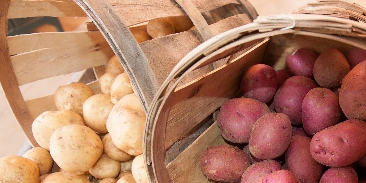 Картофель, сорта