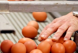 St. Ewe Eggs, супер-яйцо, Великобритания, Ребекка Тонкс