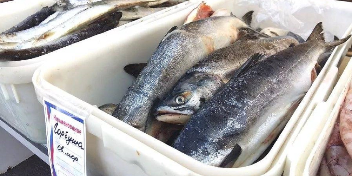 Доступная рыба, цены на рыбу, горбуша, голец ,Хабаровск,