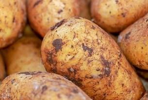 сорт картофеля «Айтмурат», Казахстан, генетика