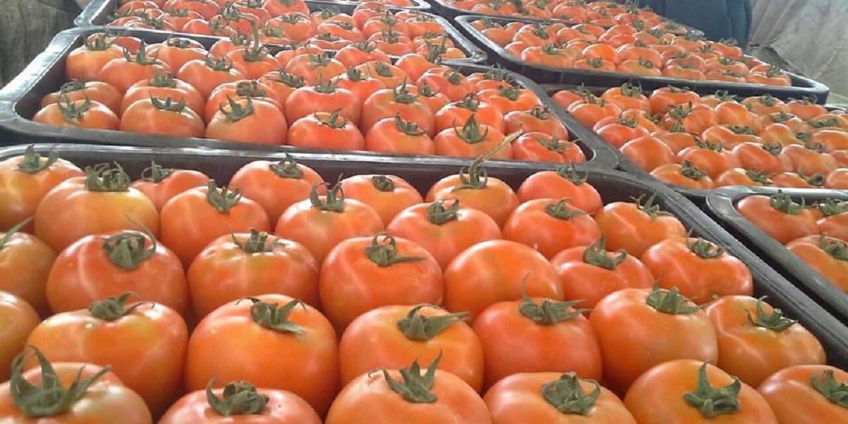 помидоры, томаты, Марокко, вируса мозаики пепино,Россельхознадзор
