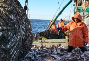 добыча рыбы, Камчатка