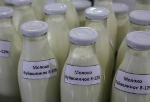 Буйволиное молоко, производство, Подмосковье