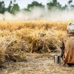 Госдума, законопроект, урожай, страхование, фермерство, ЧС, пандемия. погодные условия