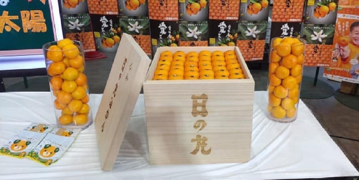 Япония, мандарины, аукцион, мандарины сорта сацума