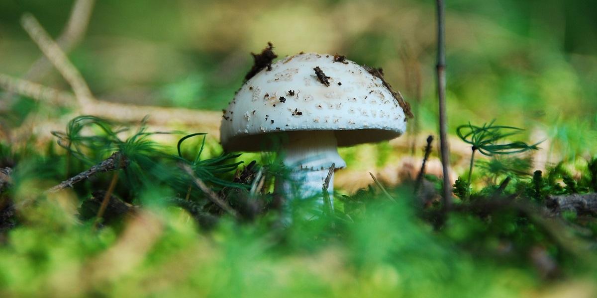 грибы, сельскохозяйственная продукция