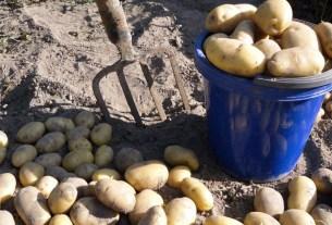дачники, ЛПХ, частные хозяйства, картофель с дачи, агрохолдинги против ЛПХ