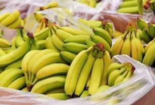 муха-горбатка с холерой, бананы Эквадора, Россельхознадзор не пустил