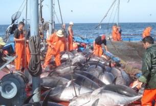 браконьерство, спутниковые данные, рыбный промысел, мировой океан