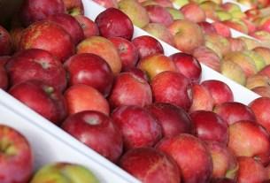 «Мичуринские яблоки» , Тамбов
