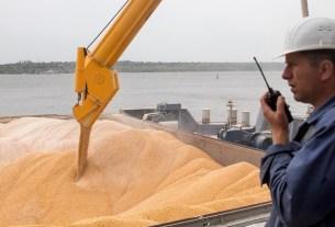 Пшеница, экспорт, таможня, проблемы, убытки