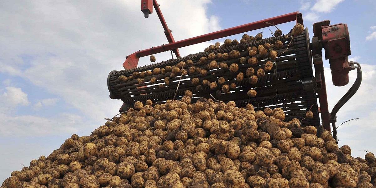 картофелеводство, импортозамещение, Марат Калимуллин, производительность картофеля